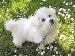 Bolonjski pas