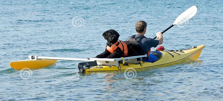 Portugalski pas za vodu