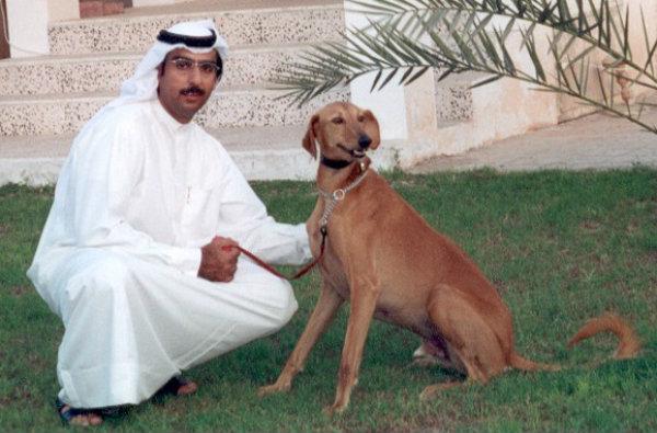 Arapski hrt- Slugi